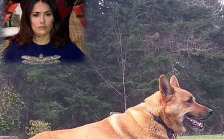 encuentran-al-asesino-del-perro-de-salma-hayek-le-disparo-porque-ya-estaba-harto