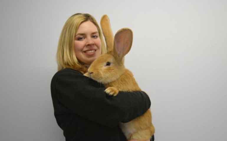 enorme-conejo-esta-buscando-un-hogar