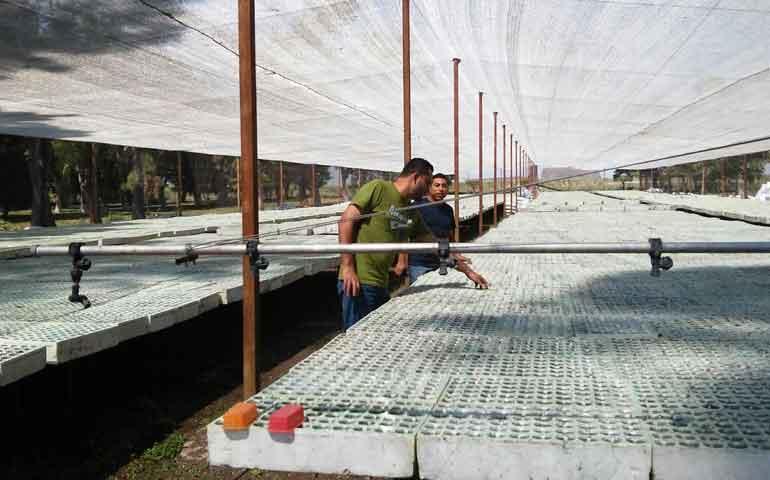 inspecciona-la-conafor-viveros-productores-de-planta-tropical