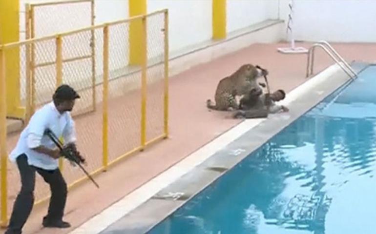 leopardo-ataca-a-6-personas-en-escuela-de-la-india