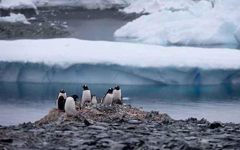 mueren-mas-de-150-mil-pinguinos-de-la-antartida