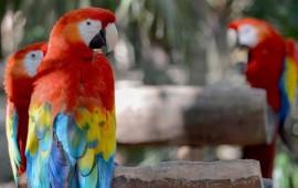 mujer-conseguia-aves-exoticas-en-nayarit-y-las-vendia-en-guadalajara