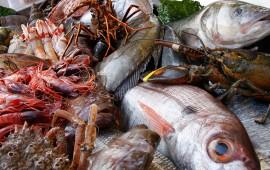 pescadores-de-nayarit-estiman-altos-costos-en-pescados-y-mariscos