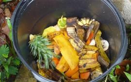 predominan-residuos-organicos-en-la-basura-de-los-tepicenses