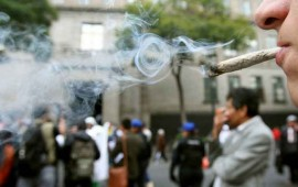 senado-no-le-teme-a-la-legalizacion-de-la-marihuana