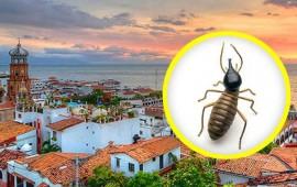 40-de-casas-en-puerto-vallarta-con-plaga-de-termitas