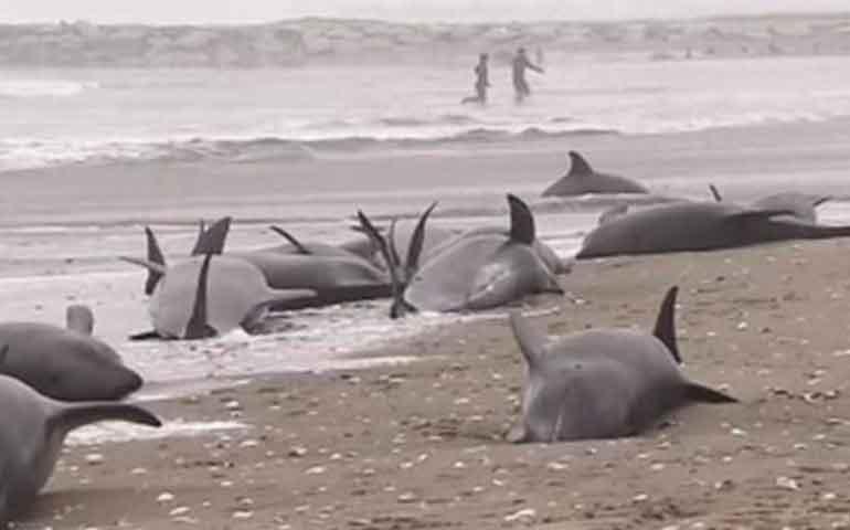 aparecen-mas-de-20-delfines-muertos-en-la-costa-argentina