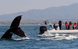 culmina-la-temporada-de-avistamiento-de-ballenas