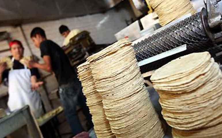 descarta-sagarpa-aumento-al-precio-de-la-tortilla