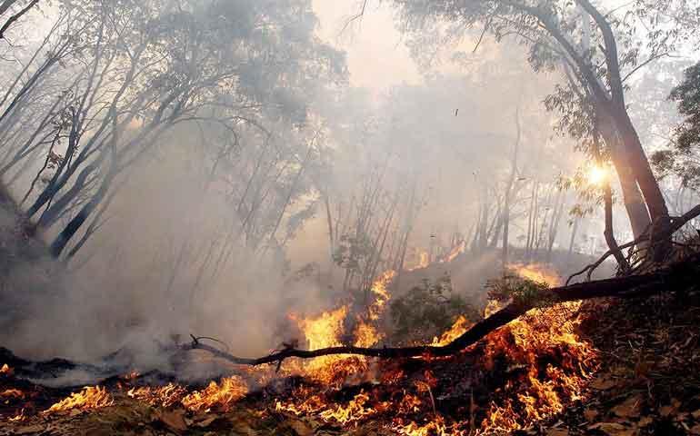 inician-acciones-ante-temporada-de-incendios-forestales-en-tepic