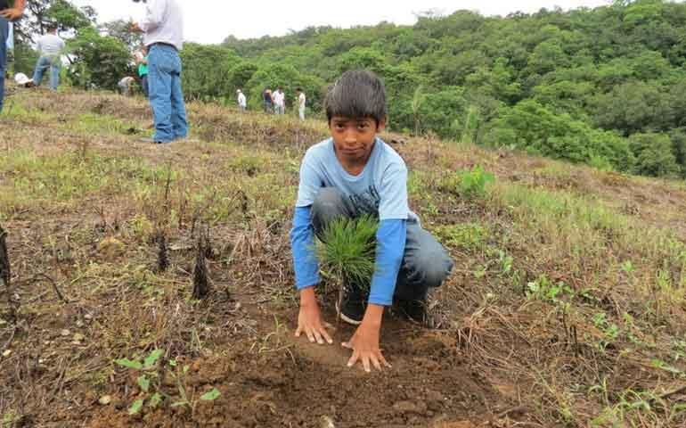 mas-de-6-mil-hectareas-de-bosques-seran-reforestados-en-nayarit-durante-el-2016