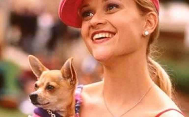 murio-el-perro-de-legalmente-rubiamurio-el-perro-de-legalmente-rubia