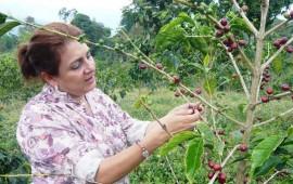 recibiran-apoyos-extraordinarios-productores-de-cafe