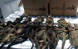 abandonan-a-20-iguanas-dentro-de-maleta-central-de-autobuses