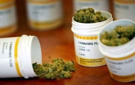 aprobaran-el-viernes-mariguana-medicinal-gamboa