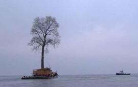el-arbol-que-surca-las-aguas-del-mar-negro