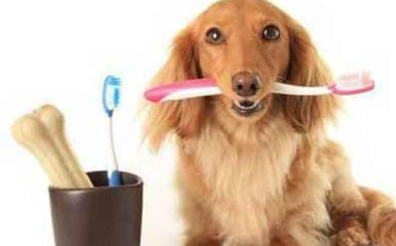 3-remedios-caseros-para-mejorar-el-aliento-de-tu-perro