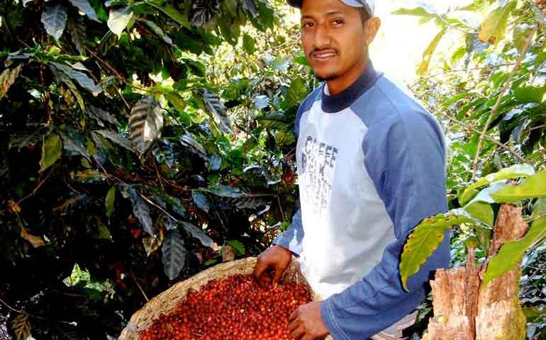 apoyara-gobierno-del-estado-a-productores-de-cafe