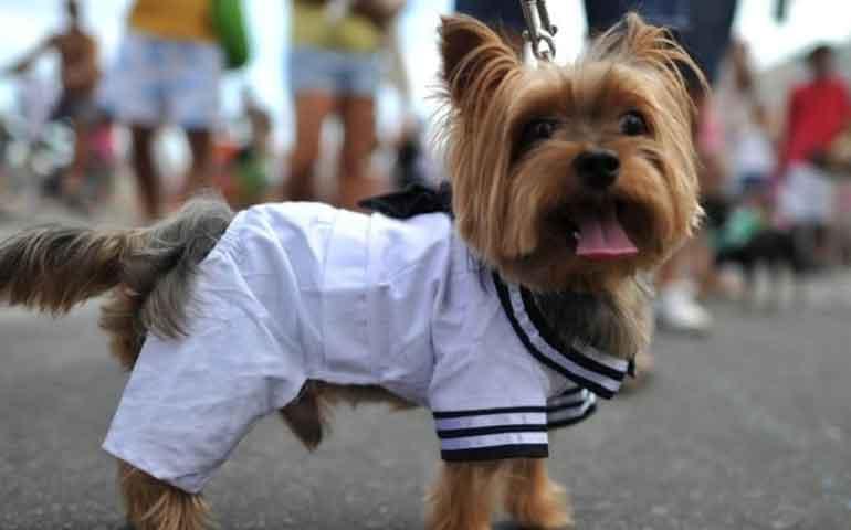 humanizacion-de-mascotas-tambien-se-da-en-tepic-de-que-se-trata-esto