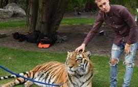 justin-bieber-posa-con-un-tigre-y-desencadena-la-furia-de-peta