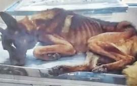 perros-policias-sufrian-desnutricion-en-silao-les-daban-croquetas-baratas