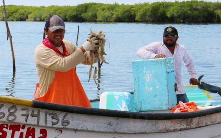 pescadores-denuncian-saqueo-de-camaron-en-el-pacifico