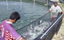 avanza-el-ordenamiento-de-granjas-acuicolas