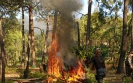 destruyen-en-amatitan-22-mil-plantas-de-mariguana