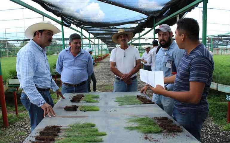 entregan-viveros-planta-para-reforestacion-2016