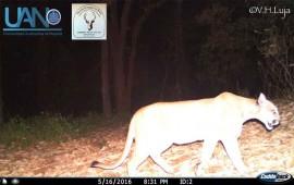 especialista-alerta-sobre-danos-a-especies-de-reserva-ecologica-del-san-juan