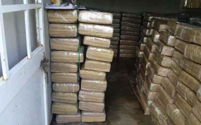 asegura-pgr-mas-de-mil-800-kilos-de-marihuana-en-amatlan-de-canas