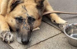 carcel-a-quien-maltrate-animales-edgar-veytia