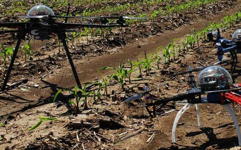 cientificos-disenan-programas-para-que-drones-detecten-plagas