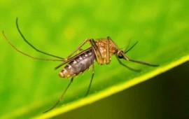 el-mosquito-es-el-animal-mas-mortifero-para-el-ser-humano