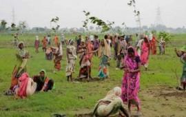 records-guinness-50-millones-de-arboles-fueron-plantados-en-un-dia1