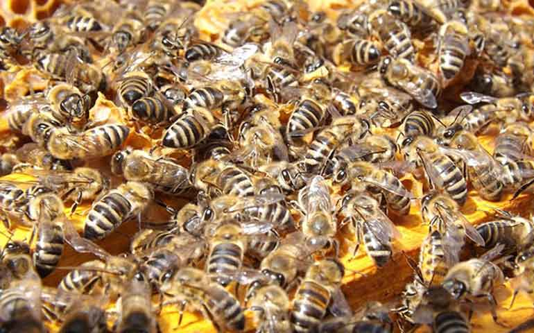 abejas-atacan-a-ninos-en-excursion-a-cerro-de-sinaloa
