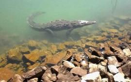cocodrilo-ataco-y-se-llevo-a-un-pescador-en-tomatlan