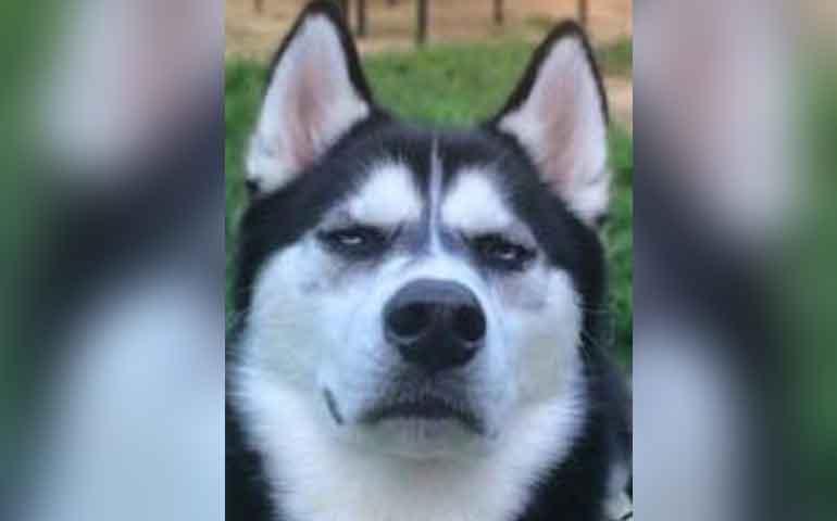 conoce-al-perro-grunon-que-le-pago-la-universidad-a-su-dueno