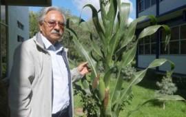 cientificos-mexicanos-crean-3-tipos-de-maiz-tolerantes-a-la-sequia