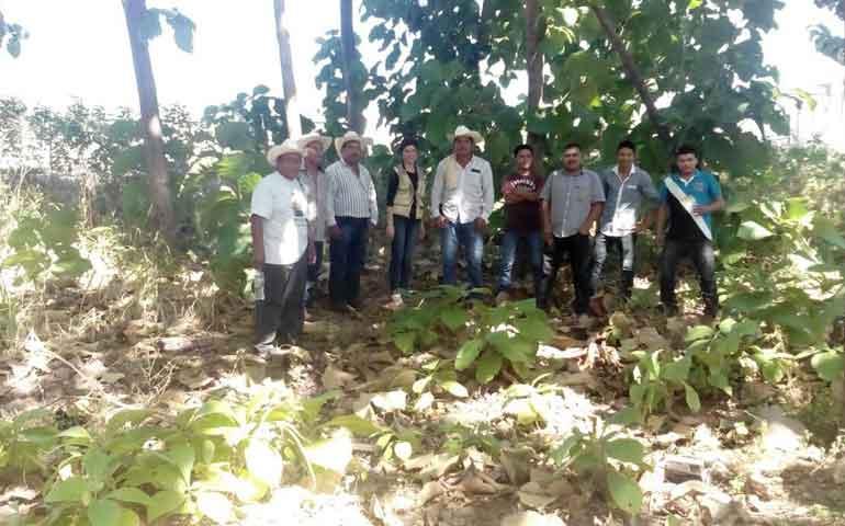emprende-conafor-proyecto-para-resguardar-bosques