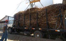 exportacion-de-cana-dejara-una-derrama-de-4-mil-millones-de-pesos-a-nayarit
