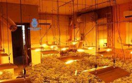 familia-a-la-carcel-por-llenar-sus-casas-de-mariguana