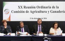 senadores-manifiestan-preocupacion-para-proteger-la-apicultura
