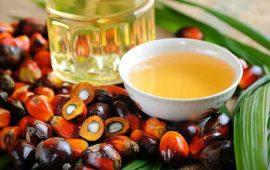 el-aceite-de-palma-verdaderamente-causa-cancer
