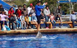 21-ninos-de-la-unidad-de-rehabilitacion-realizan-tour-de-avistamiento-de-ballenas