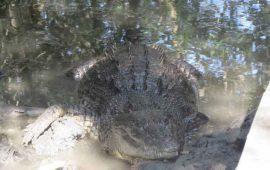 el-santuario-de-cocodrilos-el-cora-renueva-su-oferta