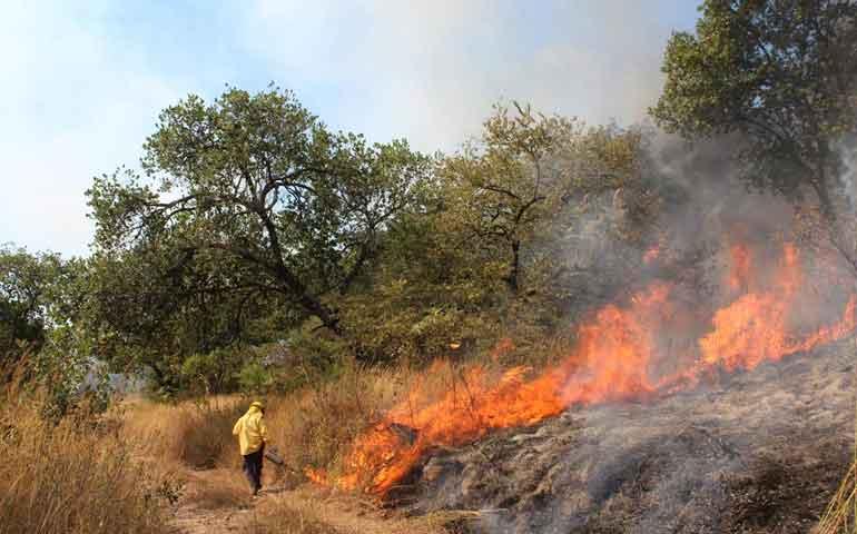 se-registra-primer-incendio-forestal-del-ano-sucedio-en-samao