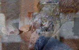 visitantes-matan-a-pedradas-a-cocodrilo-en-zoologico-de-tunez