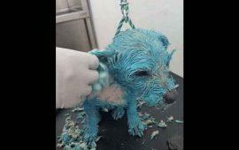 bana-a-perrita-de-azul-con-pintura-de-aceite-y-lo-presume-en-facebook