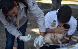 convocan-a-vacunar-a-perros-y-gatos-contra-la-rabia